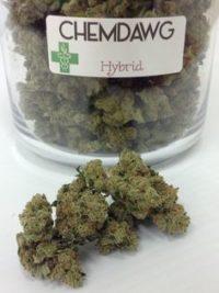 buy chemdawg weed online