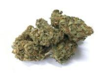 buy acdc strain online