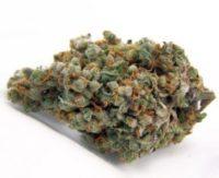 buy trainwreck weed online