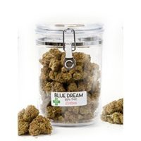 buy blue dream strain online