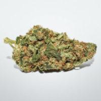 buy white widow strain online