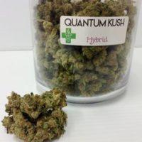 buy quantum kush online