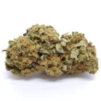 buy moby dick weed strain online